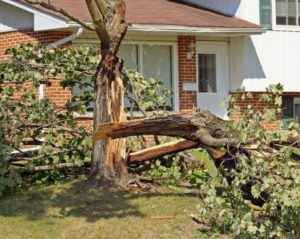 Emergency Tree Service Hilltop