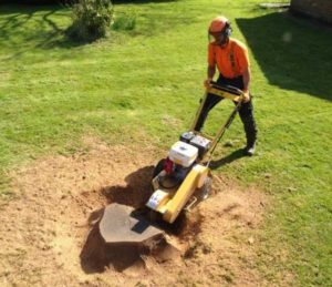 Stump Grinding Park Hill