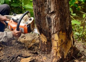 Tree Removal Bear Valley