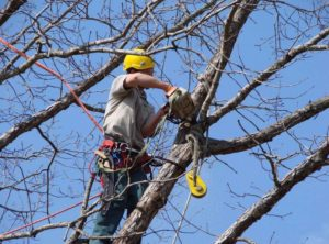 tree trimming Union Station